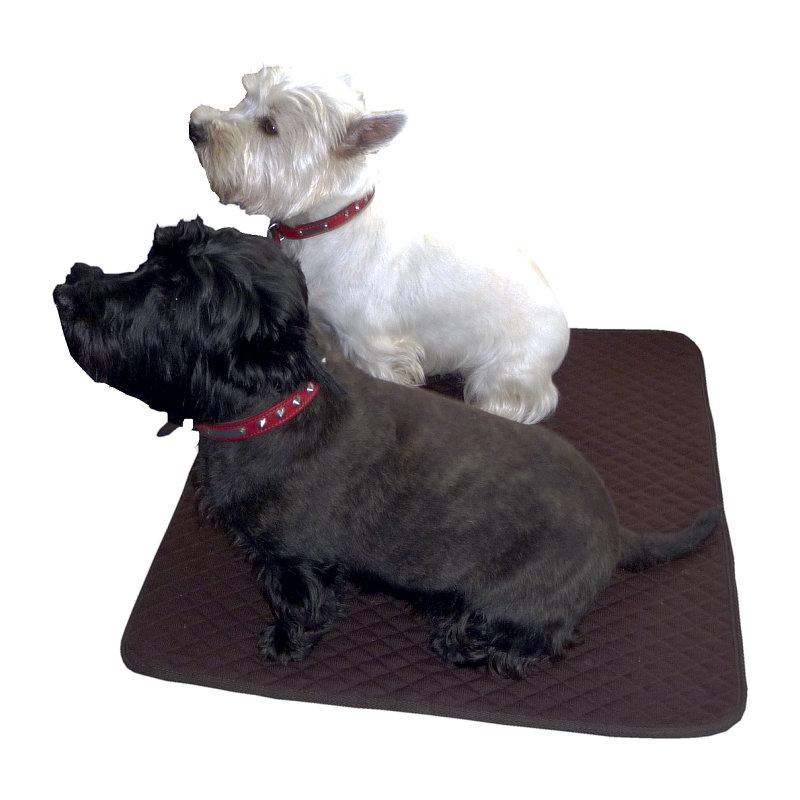 Dog Has Diarrhea On Rug: Thermatex Dog Mats\n